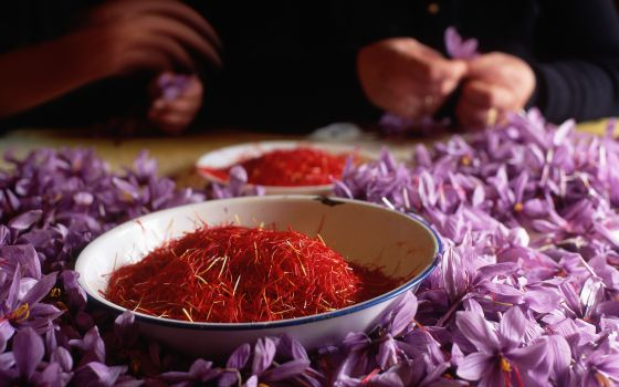 All About Spanish Saffron