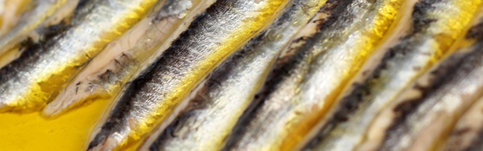 Lolin Cantabrico Anchovies in Olive OIl